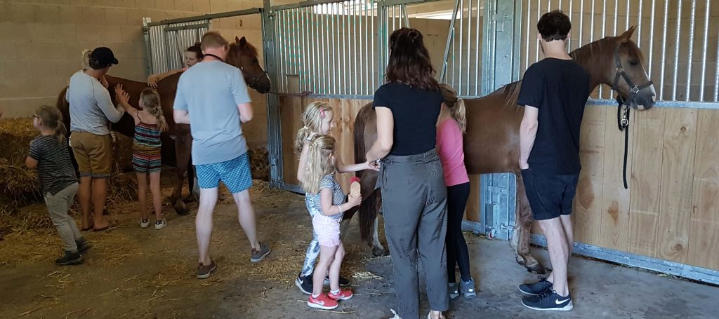 Achterhoek vakantie met paard