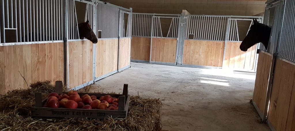 Vakantie met paard Gelderland